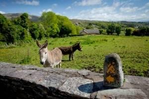 Ahakista Guided Walk @ Ahakista | Ahakista | County Cork | Ireland