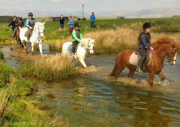 Summer Pony Camp at Bantry Bay Pony Trekking