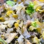 Seaweed Festival