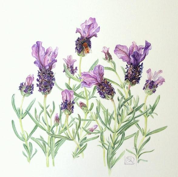 Botanical Art Demonstration with Shevaun Doherty @ Mannings Emporium | Ballylickey | County Cork | Ireland